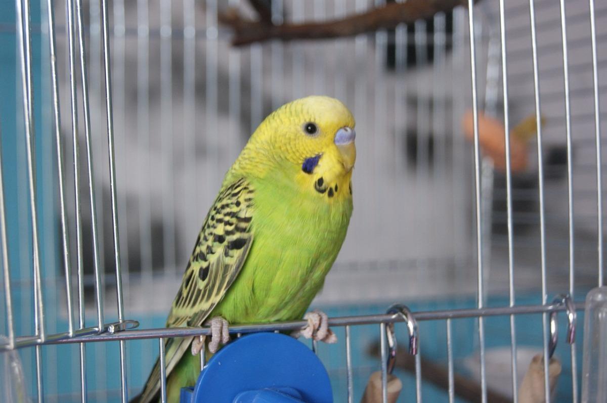 सेठजी के एक घर एक पिंजरे में तोता पाला हुआ था