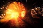 trees-2562083_640